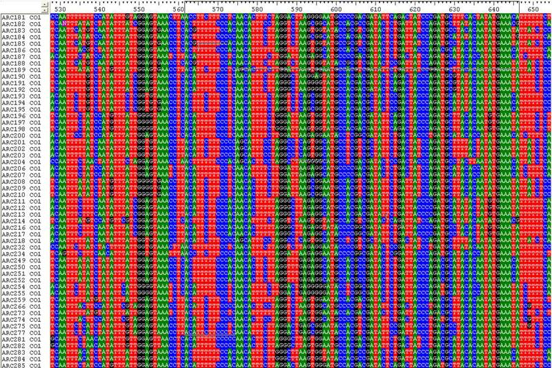 Genetische Vielfalt