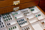 collection drawer of <i>Eupholus</i> weevils