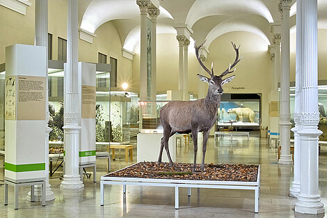 "A view of the permanent exhibition ""Native flora and fauna"" with the majestic red deer"