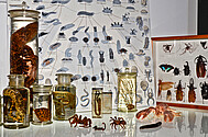 Zoological Objects