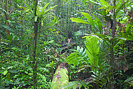 lowland forest of Biak island